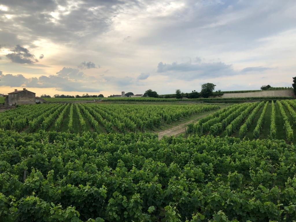 Vīnogulaji Bordo